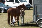 Horse Trailer Loading Handling Preparation Stock24