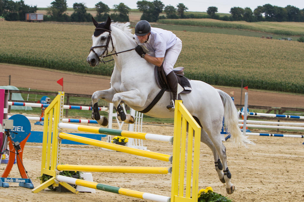 Level 5 Showjumping - L-Springen 60 by LuDa-Stock