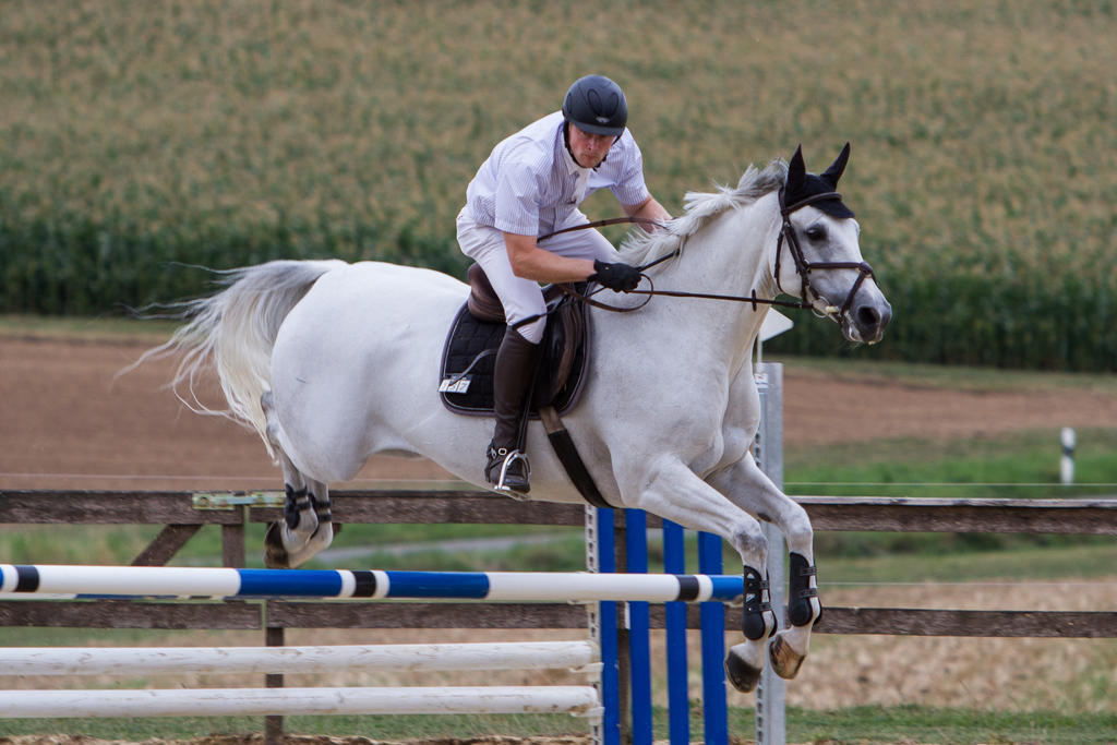 Level 5 Showjumping - L-Springen 59 by LuDa-Stock