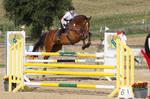 Level 5 Showjumping - L-Springen 46 huge horse