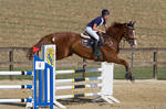 Level 5 Showjumping - L-Springen 27