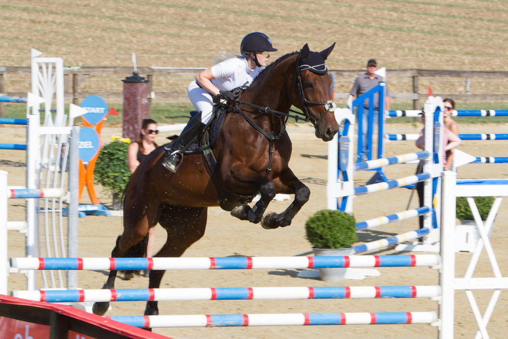 show jumping levels