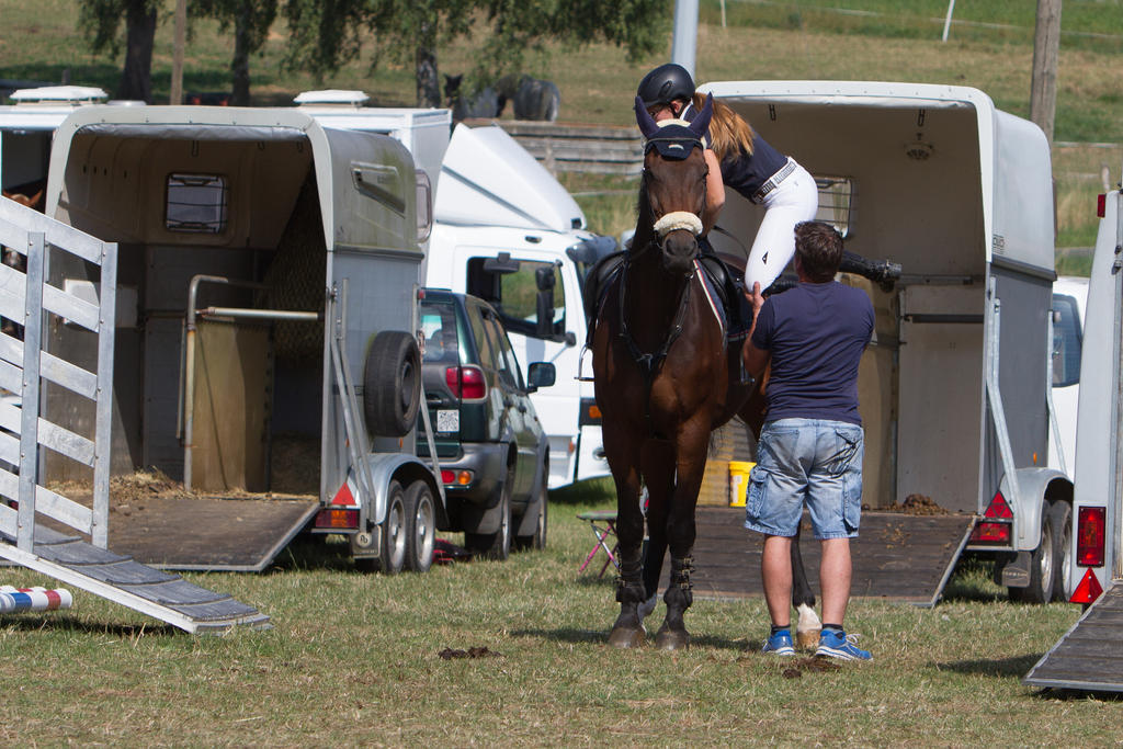 Horse Mounting between Trailers on Competition by LuDa-Stock