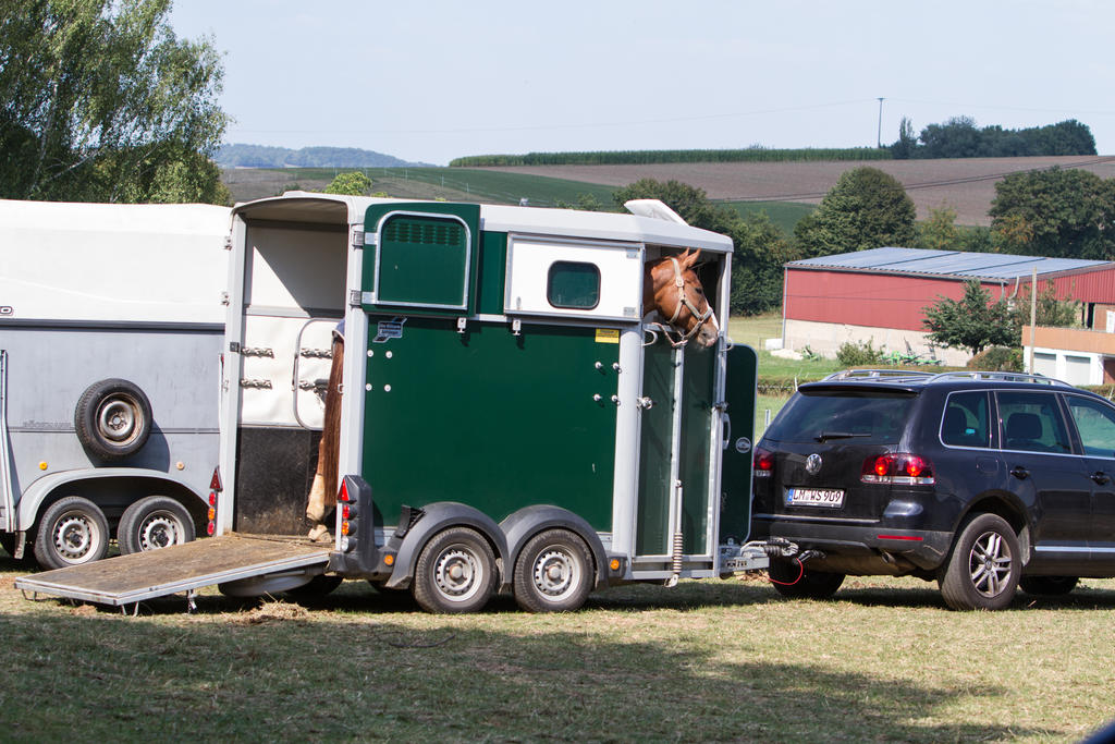 Horse on Trailer Waiting Watching by LuDa-Stock
