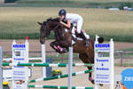 Showjumping Stock Beautiful TB mare series