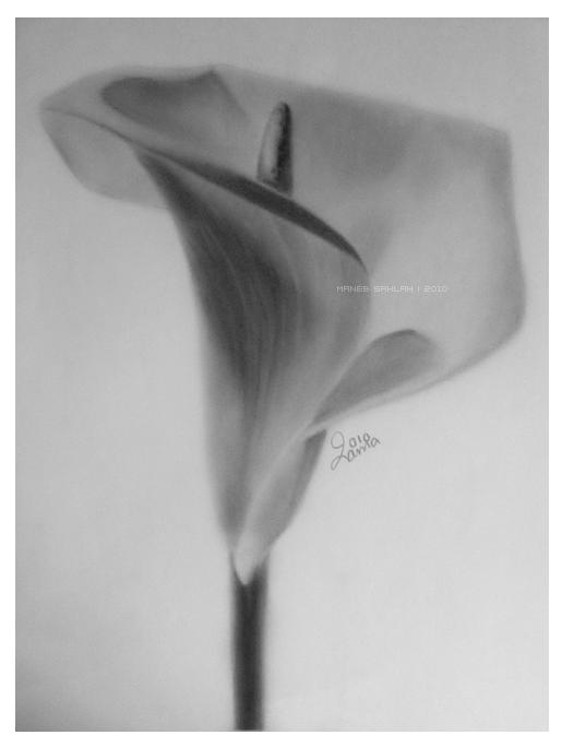 Calla Lily by Maneb-Sahlah