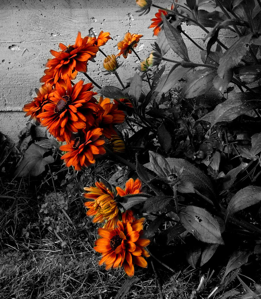 flowers selective coloring color - photo #4