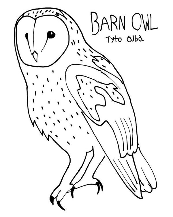 Barn owl colouring page by projectowl on deviantart for Barn owl coloring pages