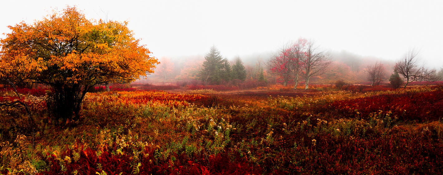 Now in the Smithsonian: Autumn in Dolly Sods by AugenStudios