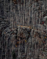 Bare Root Rocks