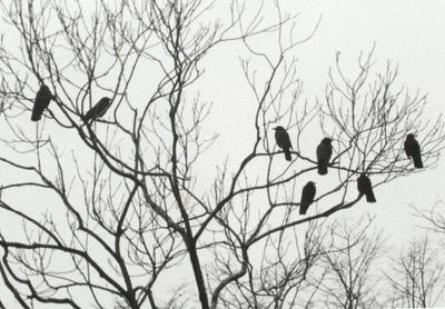 Seven Crows by Merlyn-Gabriel
