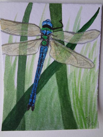dragonfly by Merlyn-Gabriel