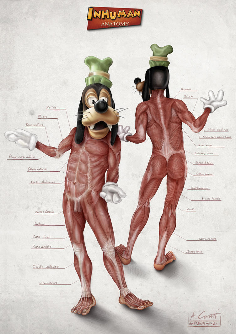 Goofy's Anatomy by AlessandroConti
