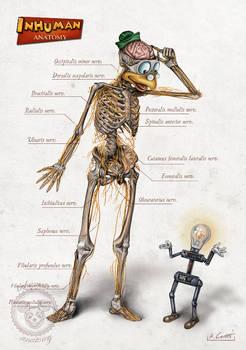 INHUMAN ANATOMY (series 2) Gyro's anatomy