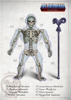 SKELETOR skeleton system anatomy