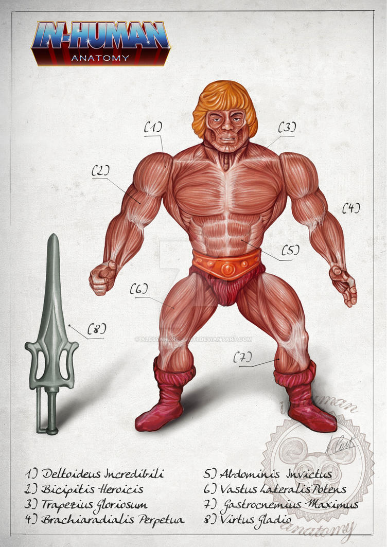 HE-MAN muscular system anatomy by AlessandroConti
