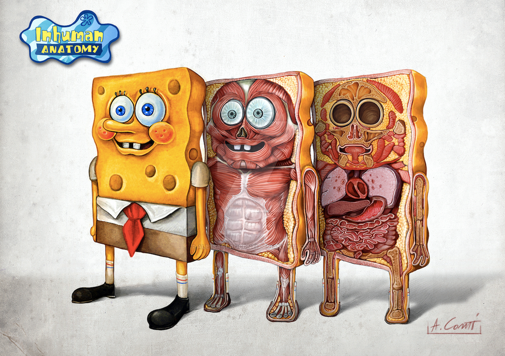 SPONGEBOB anatomy by AlessandroConti