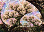 Fresh blossom from dark boughs