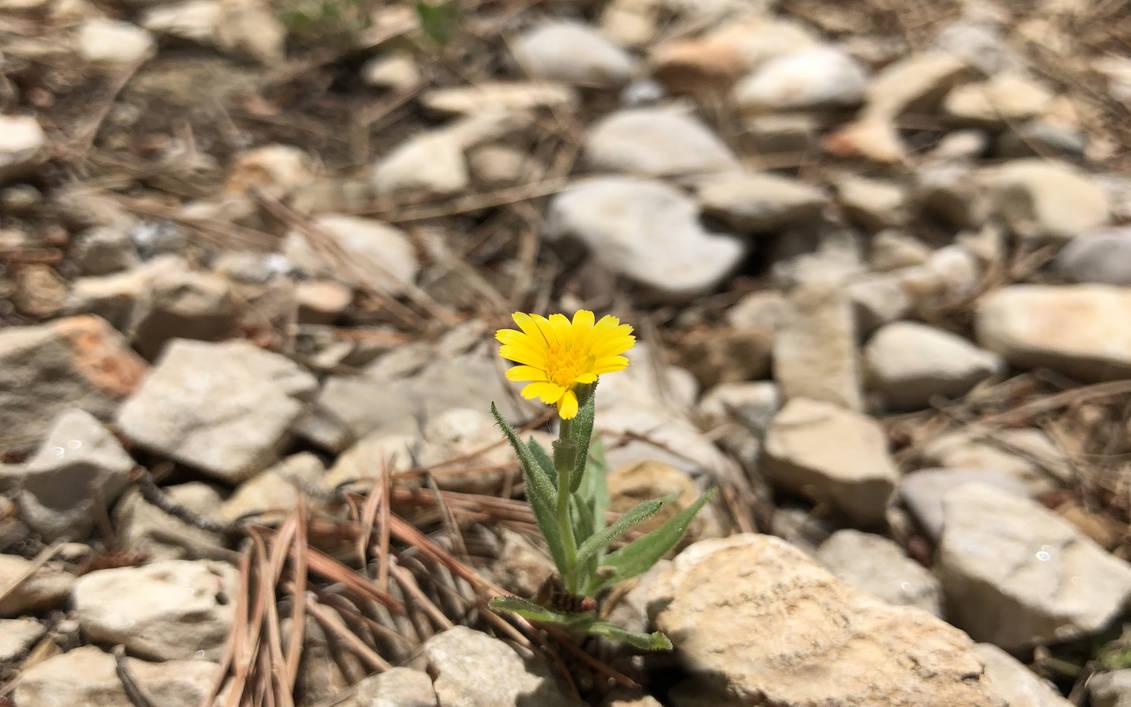 Tiny flower by GeorgeXVII