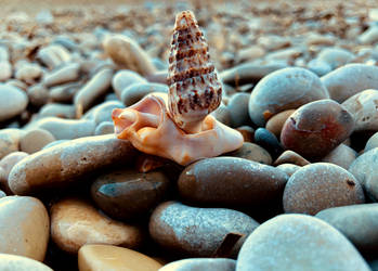 Shells by GeorgeXVII