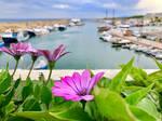 Harbour flowers