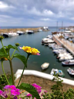 Flower by GeorgeXVII