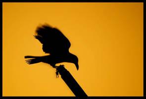 The Raven by Shikaz