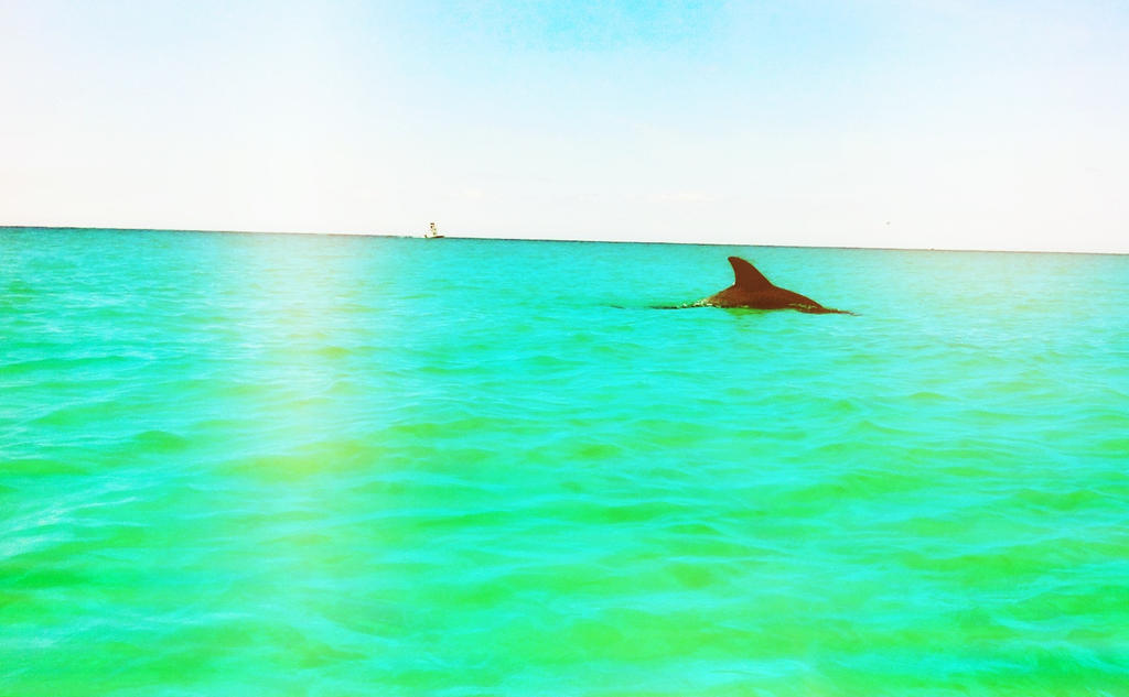 The Dolphin by WadeCreativeSuite