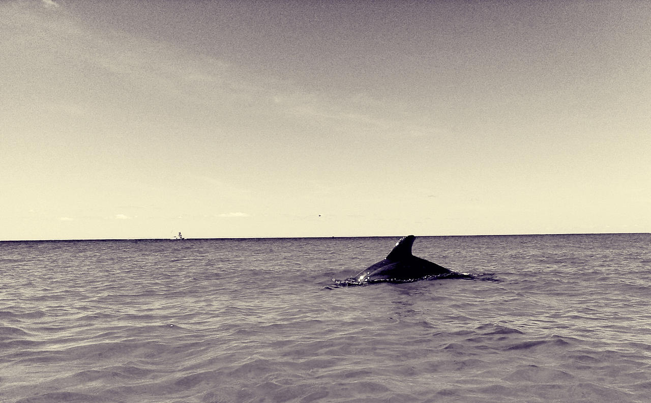 The Retro Dolphin by WadeCreativeSuite
