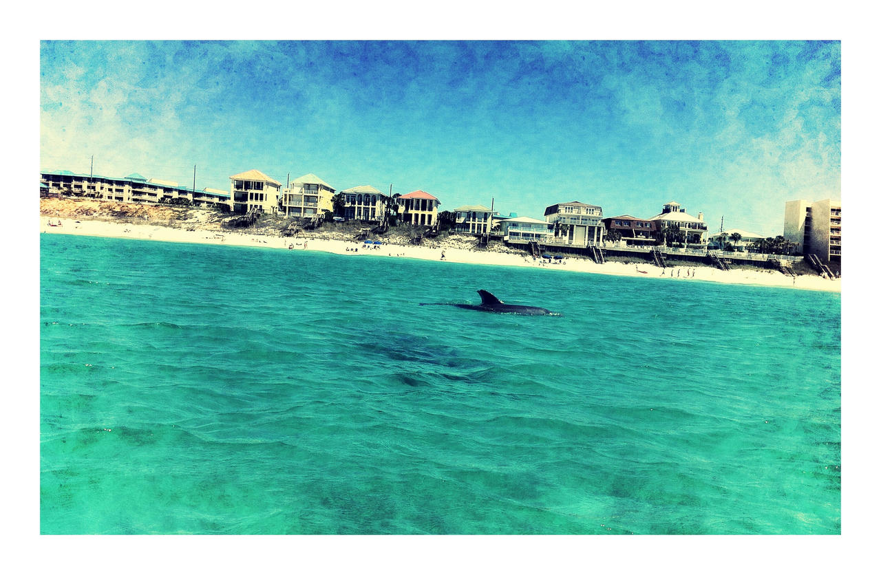 The Dolphin Maybe by WadeCreativeSuite
