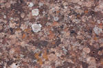 texture1 by merkchen