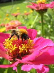 little bee on little flower