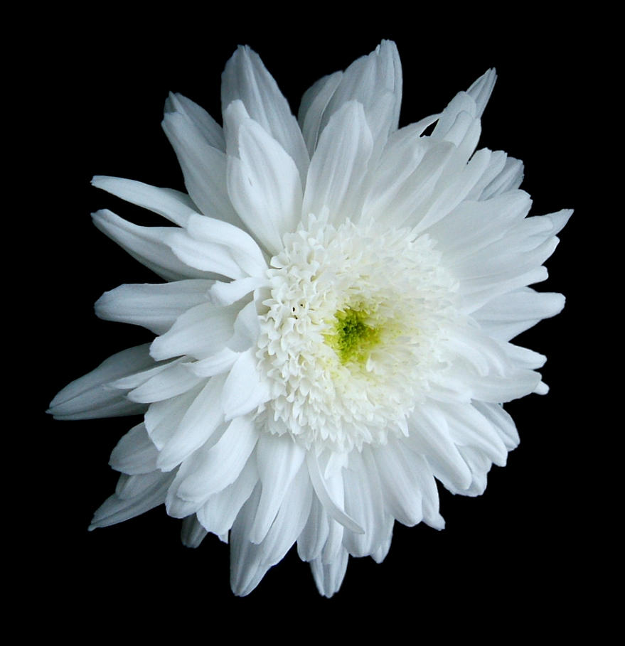 Pretty White Flower By Wb Skinnerstock On Deviantart