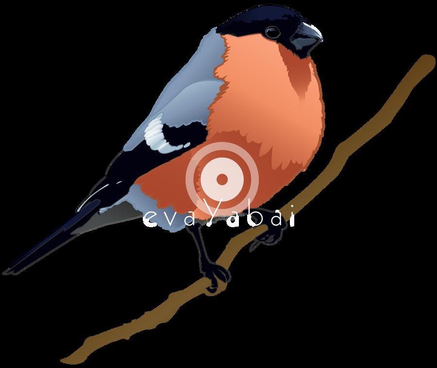 Bullfinch Dompfaff by evaYabai