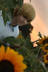 Kise: Sunflower in the Sunset