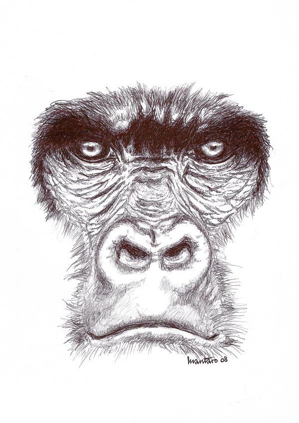 Gorilla Face Line Drawing : Gorilla s face by mantarosan on deviantart