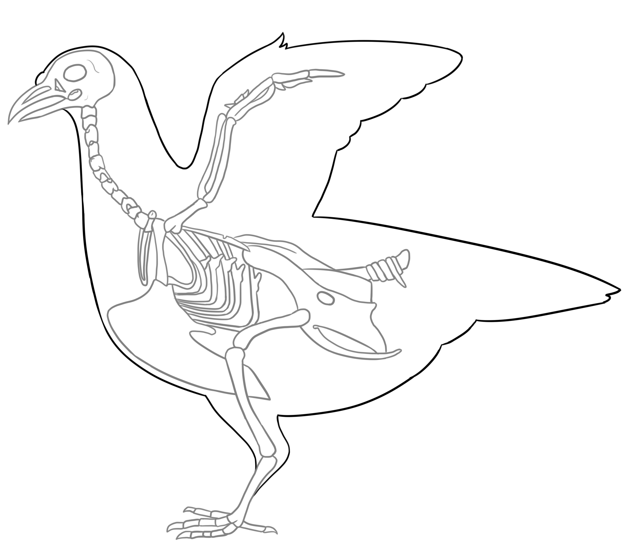 Bird anatomy by RuthlessSoldier on DeviantArt