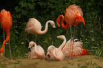 Flamingo Stock 6