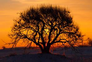 dawn 030111 by GreyVolk