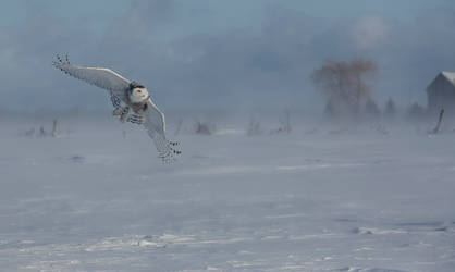 Snow Hunter by GreyVolk