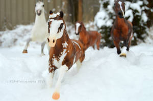 Out on a Snow Run by KLK-Photography
