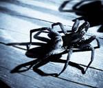 Itsy Bitsy Arachnid