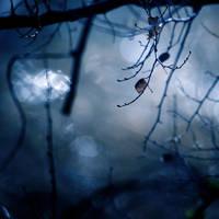 Midnight by VexingArt