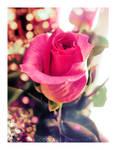 Porcelain Rose