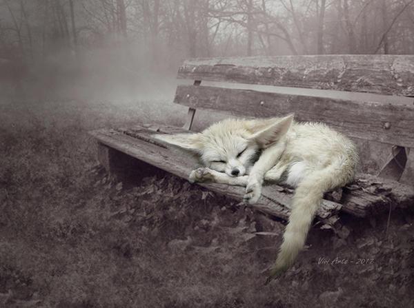 little fox by vivi-art