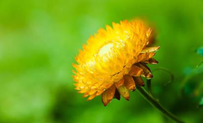 The Shining bloom by RasmusLuostarinenArt