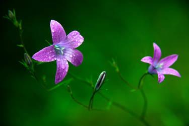 Dream flowers by RasmusLuostarinenArt