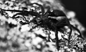 The Spider by RasmusLuostarinenArt