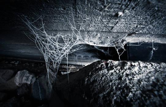 Life as a cobweb