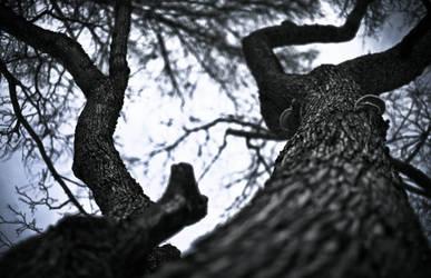 Mystery tree by RasmusLuostarinenArt